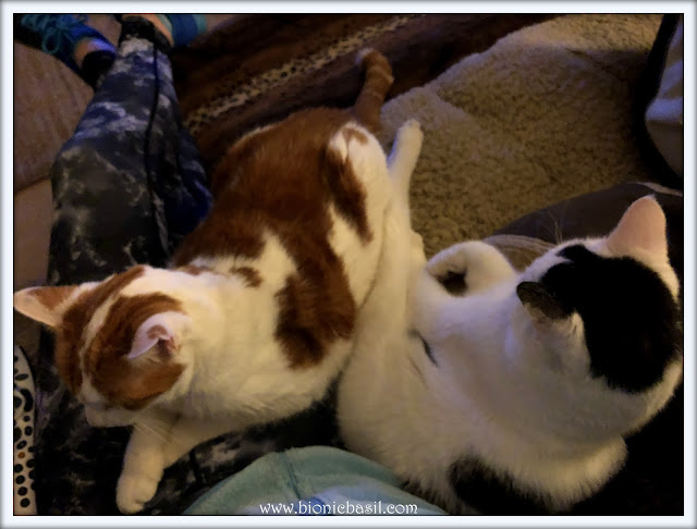 Book Reviews with Amber #153 ©BionicBasil® Move Over Smooch, This Is My Spot
