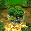 Apa Itu Budidaya Pertanian Organik?