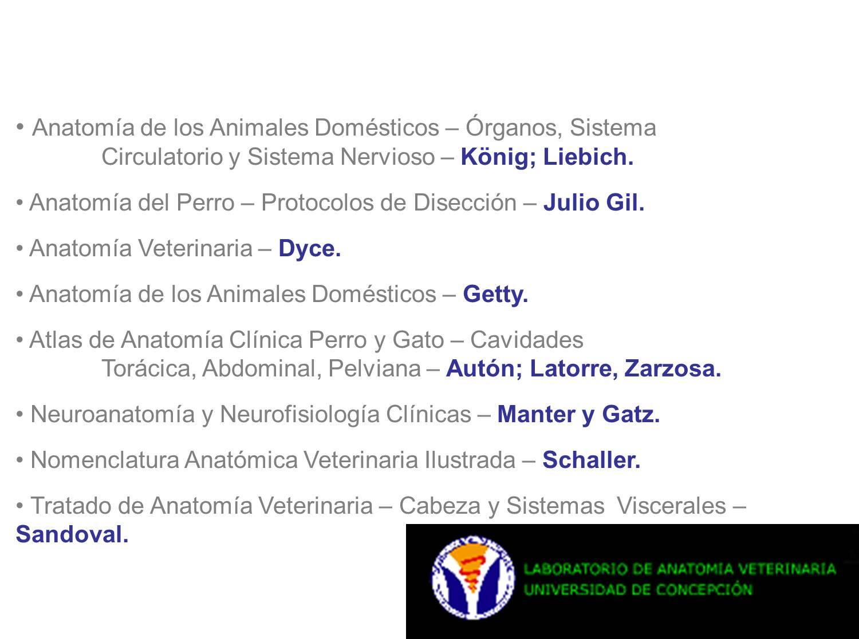 FUNDACION ARTISTICA NUEVOS SABERES. Instituto de Formación Academica ...