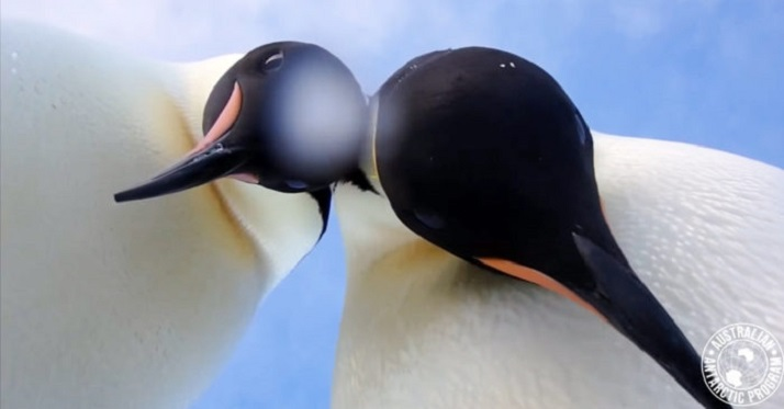 Two Penguins in Antarctica Found a Camera Hidden in the Snow And Long Tried to Understand What It Is
