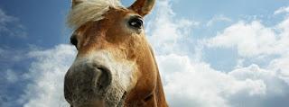 horse facebook cover