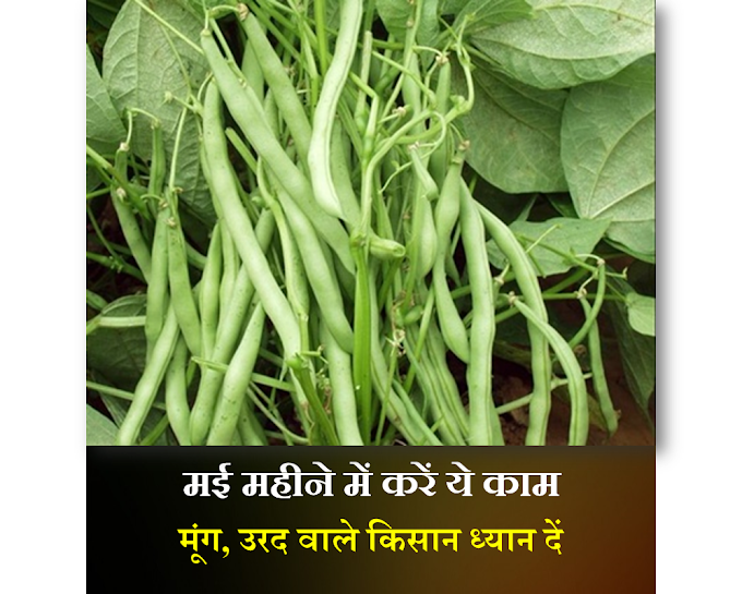 मई महीने में करें ये काम मूंग-उरद वाले किसान क्या करें क्या न करें-may vegetables-खेती- smart business plus