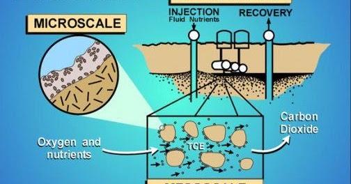 Berikut Ini Adalah Hasil Pengembangan Bioteknologi Hasil Bioteknologi Yang Dimanfaatkan Dibidang Pertanian Dan Lingkungan Berturut Turut Adalah Blog Pak Pandani