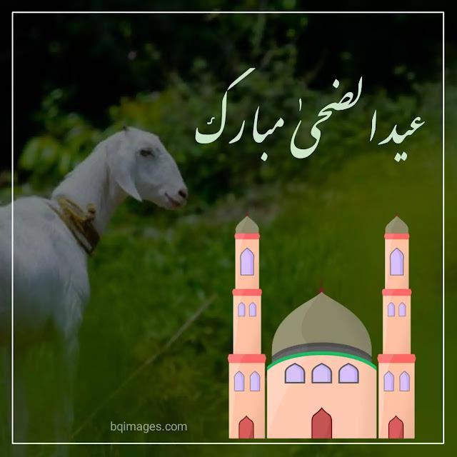 eid ul adha mubarak hd