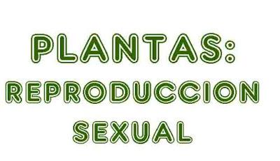 https://cplosangeles.educarex.es/web/quinto_curso/naturales_5/plantas_sexual_5/plantas_sexual_5.html