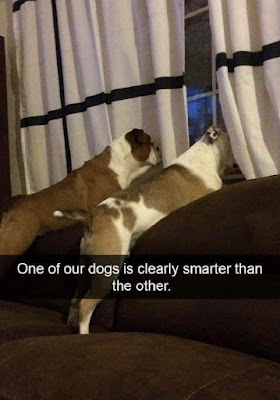 One is clearly smarter..