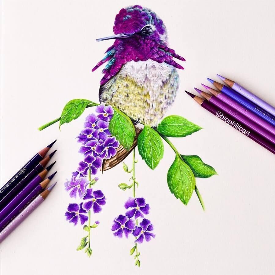 09-Hummingbird-Sallyann-www-designstack-co