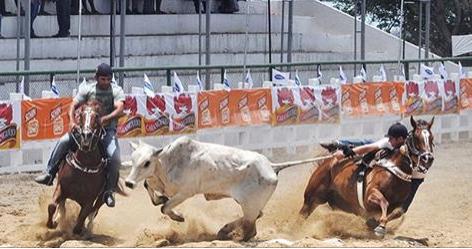 Após ação civil pública, organizadores adiam vaquejada em Palmeira dos Índios