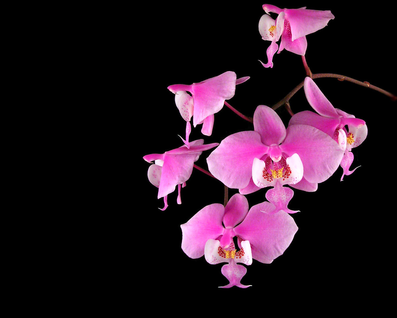 orchid wallpapers backgrounds images - photo #22