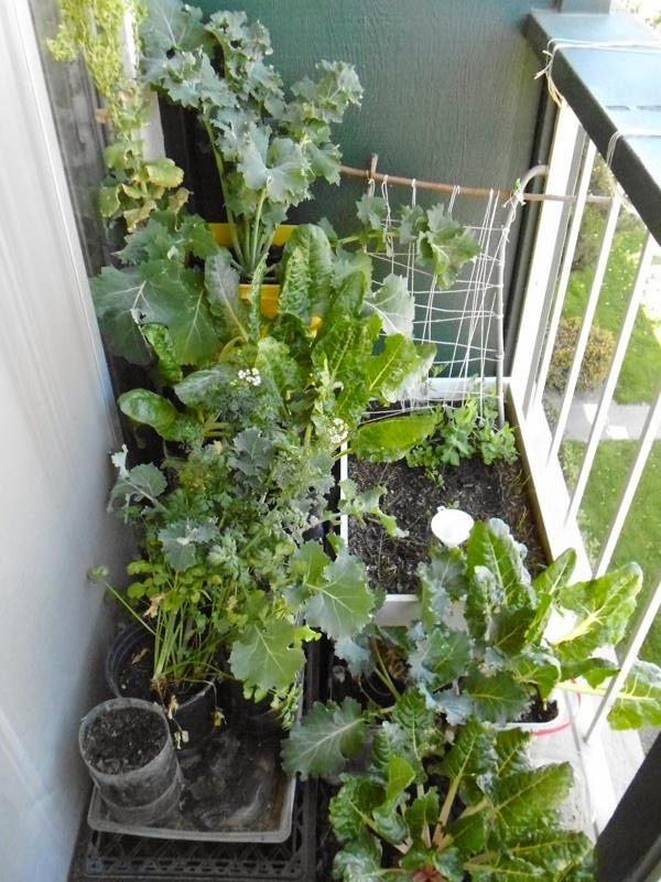 Balcony Garden left March 13