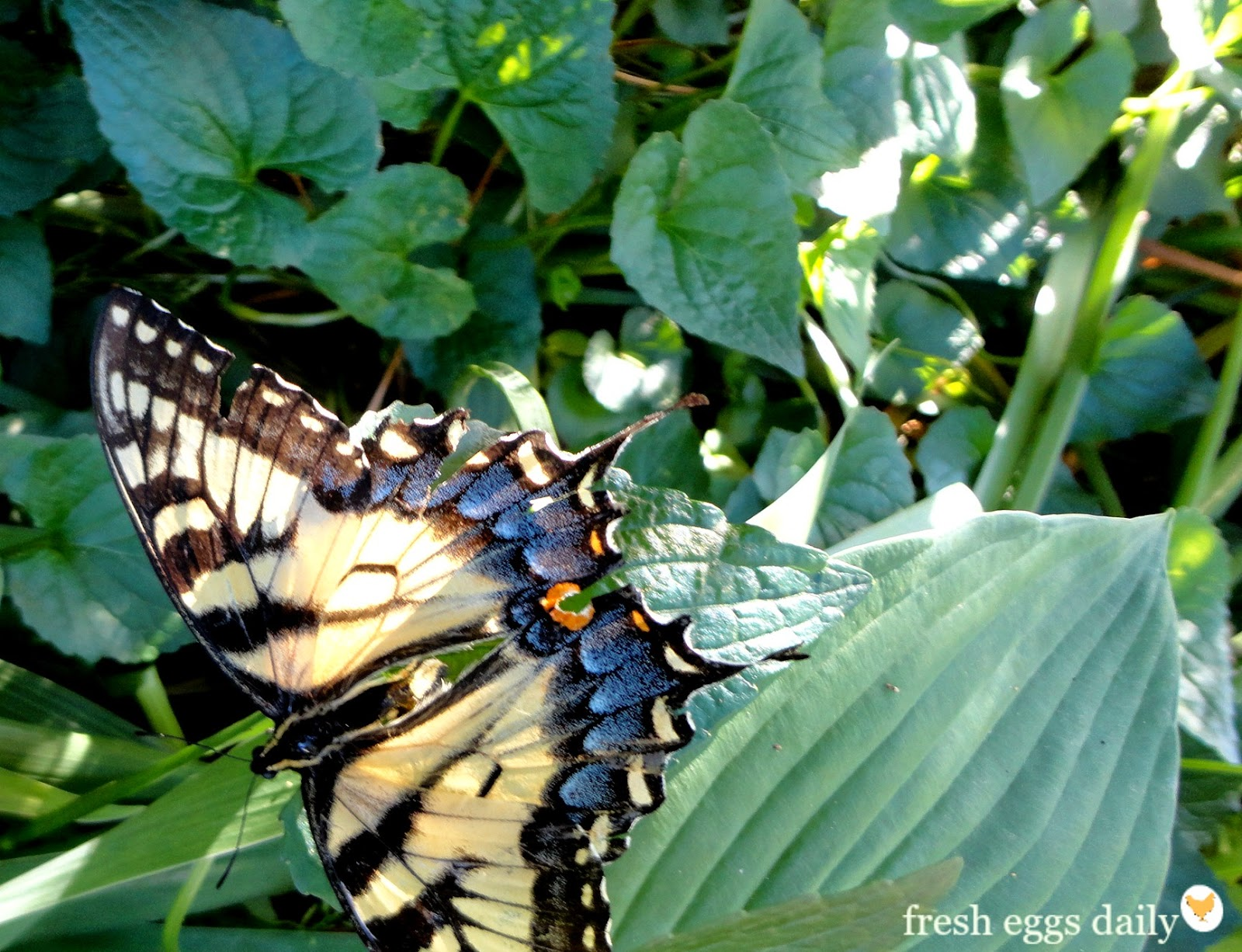 How to Plant a Butterfly Garden – Plants for Butterfly Garden