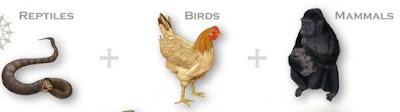 Macam-macam Perkembangbiakan Hewan secara Generatif