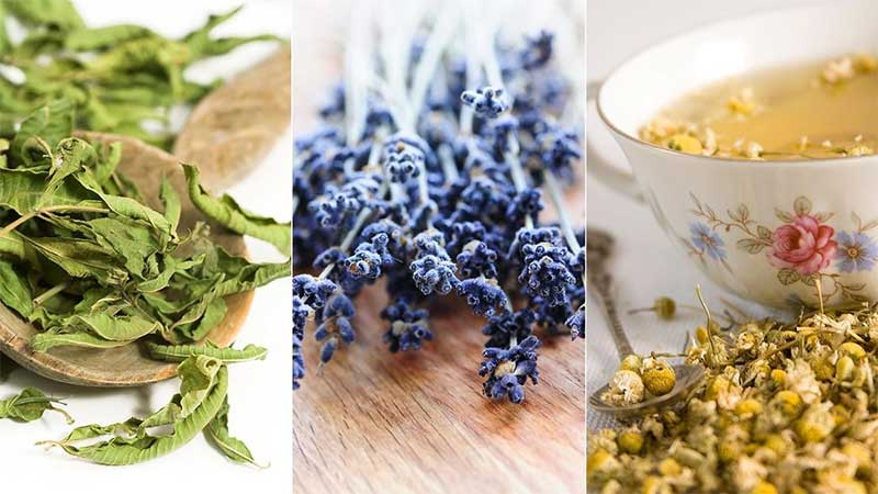 5 Calming Herbs That Helps Soothe Anxiety