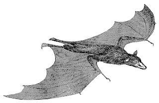 bat halloween image illustration scary clipart digital