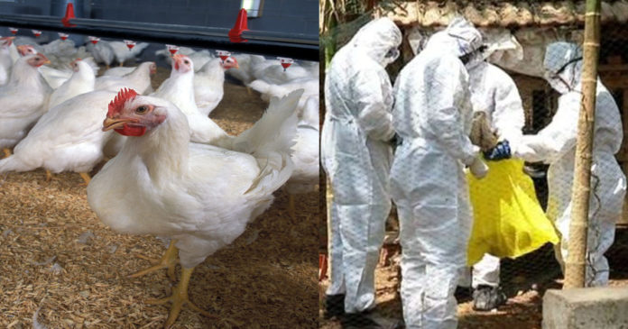 Malappuram bird flu following Kozhikode; An emergency meeting was chaired by the District Collector,www.thekeralatimes.com