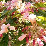 http://vontagzutag-mariesblog.blogspot.co.at/2017/05/mein-fruhlingsgarten-rund-um-den-20-mai.html