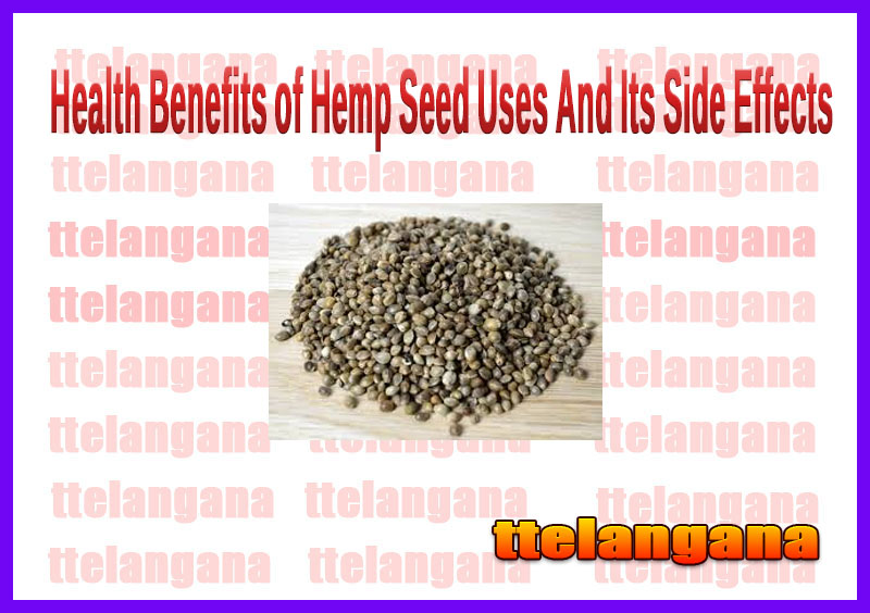 Health Benefits of Hemp Seed Uses And Its Side Effects