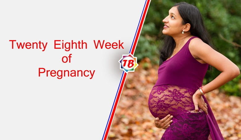 Twenty Eighth Week of Pregnancy