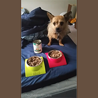 nutro limited ingredient dog food review