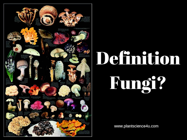 Definition of Fungus in Biology
