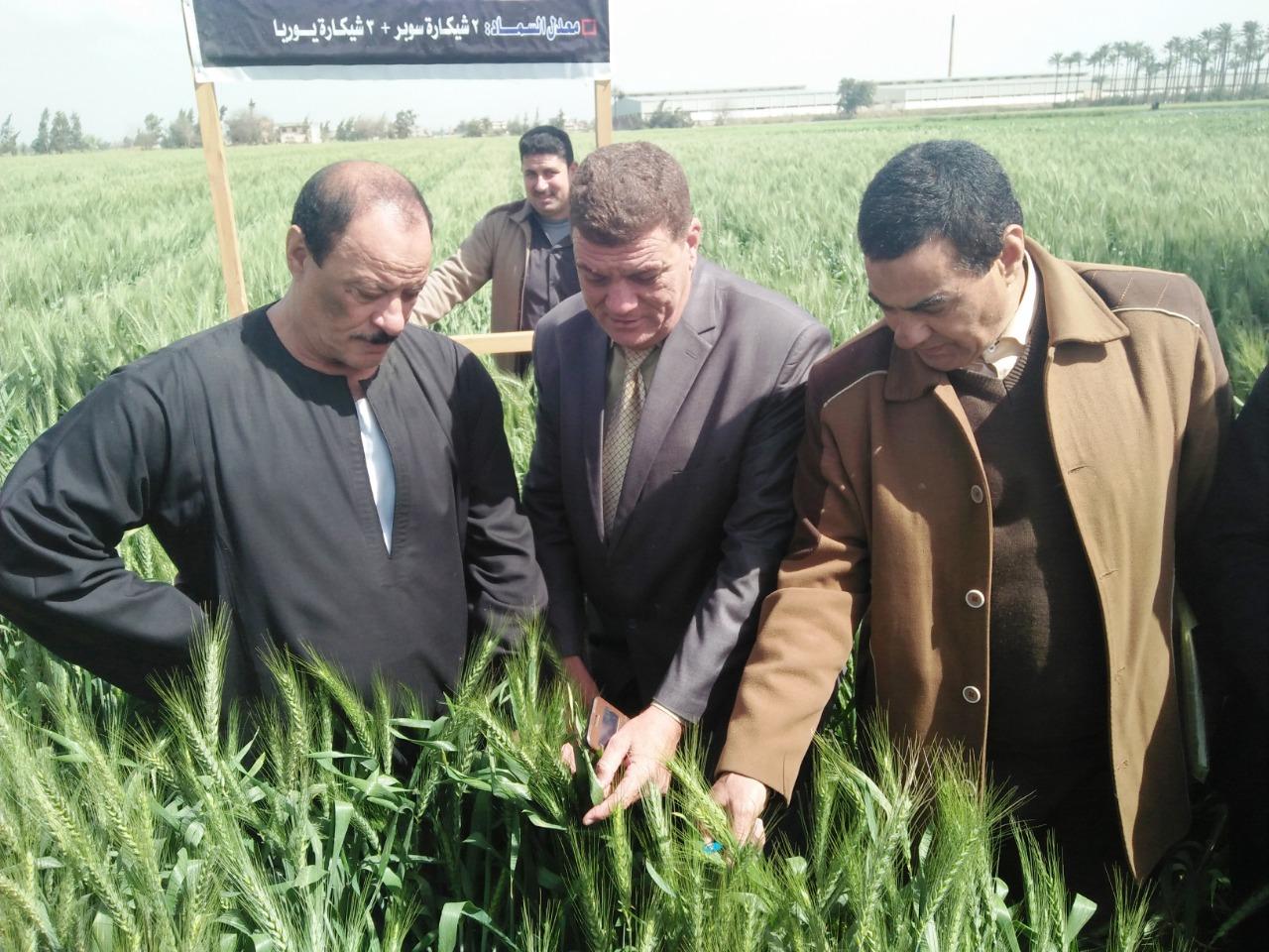 الزواوى : نتابع حصاد المحاصيل الشتوية وخاصة القمح حتى انتهاء الموسم