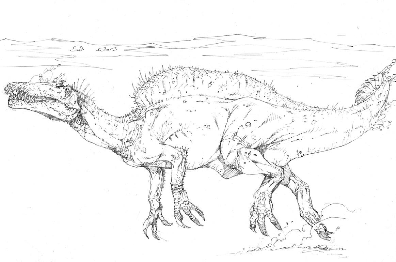 irritator dinosaur coloring pages | Carnosauria: Oxalaia