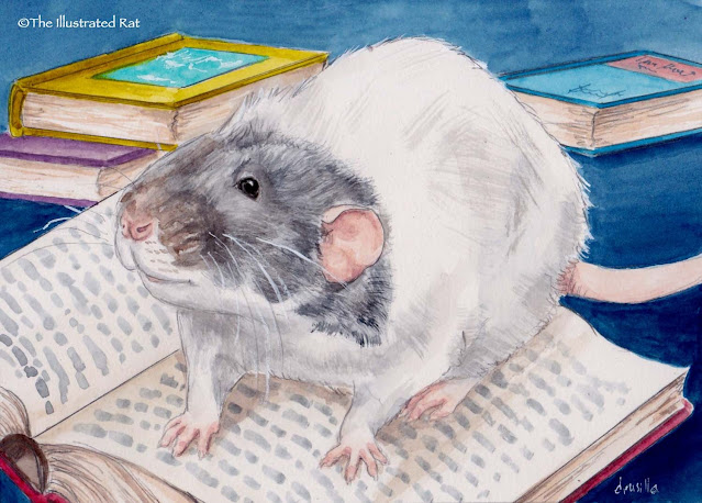 A portrait of Vincent the therapy rat from Drusilla Kehl from The Illustrated Rat