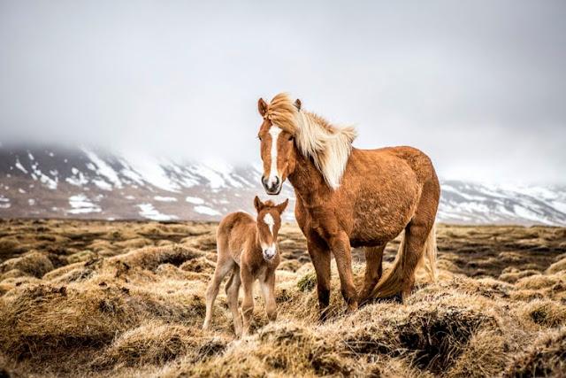 El viaje a Islandia de Alex Laurel
