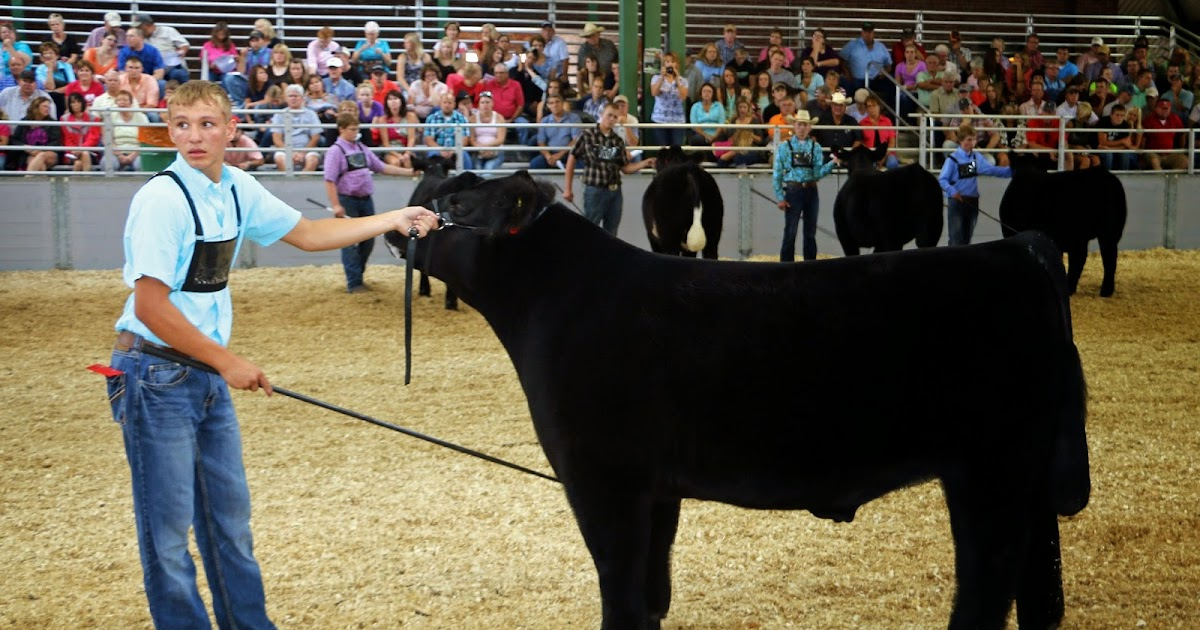 Executive Sires Inc 2014 Illinois State Fair Champion