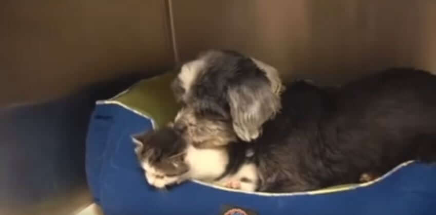 Rescuers Discovered An Abandoned Dog Nursing A Little Kitten In Ravine