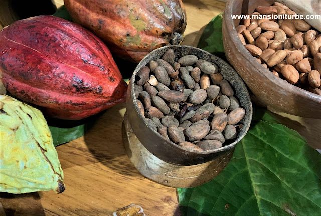 Mexican Cacao and seeds