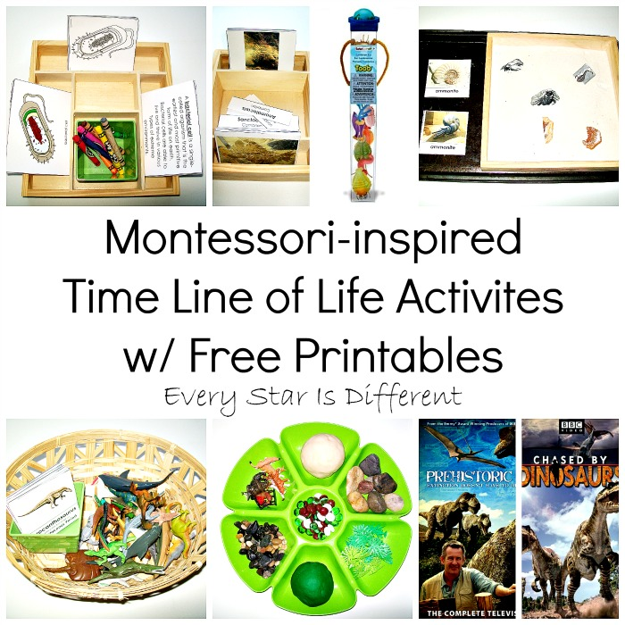 Time Line of Life Activities