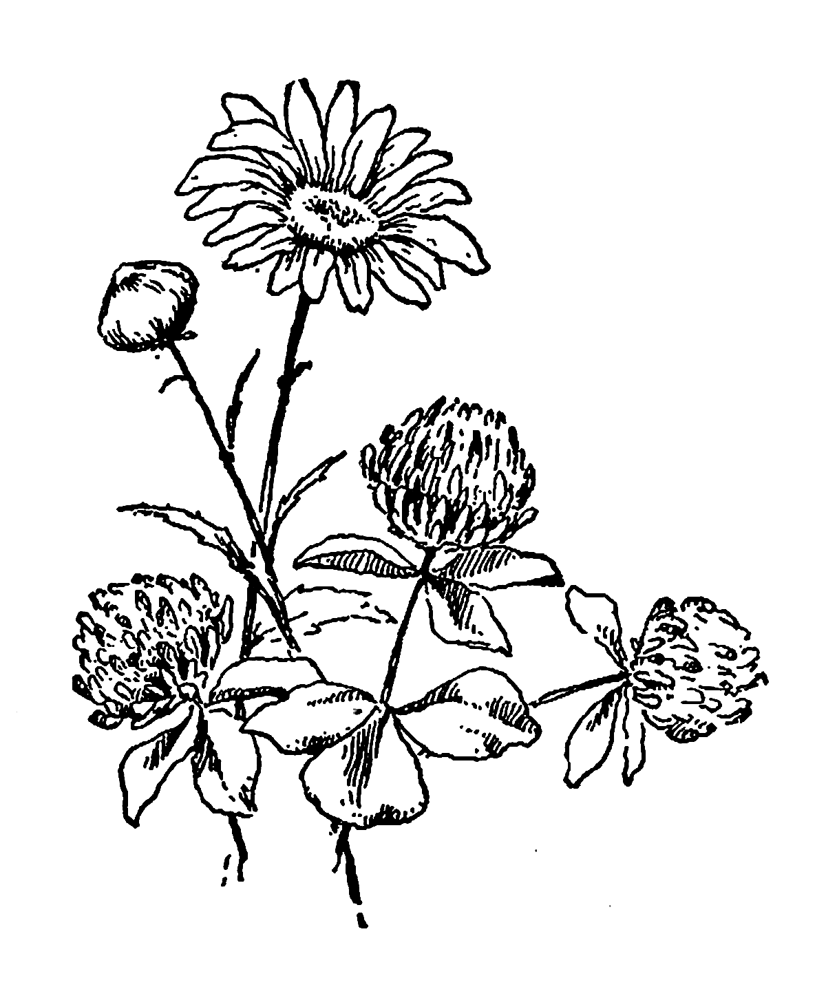 Black Clover 5 Leaf Clover