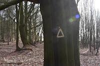 Kennzeichnung wertvoller Bäume