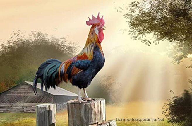 Reflexión de las enseñanzas del gallo