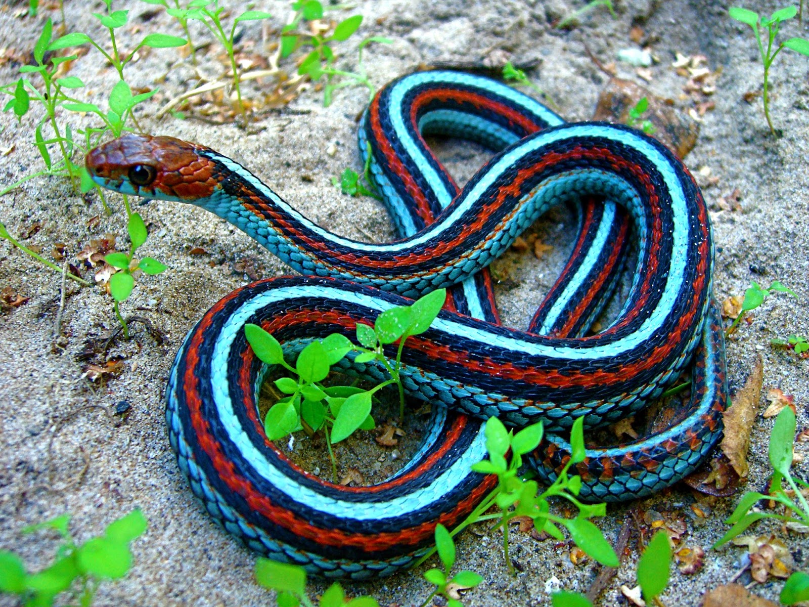 beautiful snakes pictures , photo