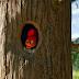 [Reseña cine] El pájaro loco (Woody Woodpecker): Una divertida sorpresa para toda la familia