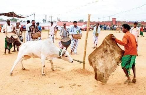 Santali festival sohrai