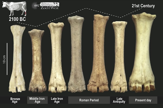 Changing livestock in ancient Europe said to reflect political shifts