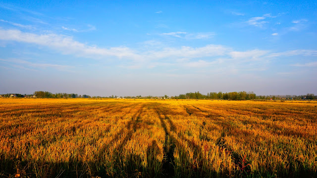 Country, busy farming and late autumn season