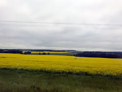 There were Beautiful Canola Fields in Bloom Everywhere