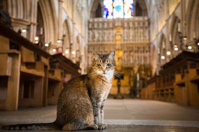 A cat sits in the aisle of a Gothic cathedral