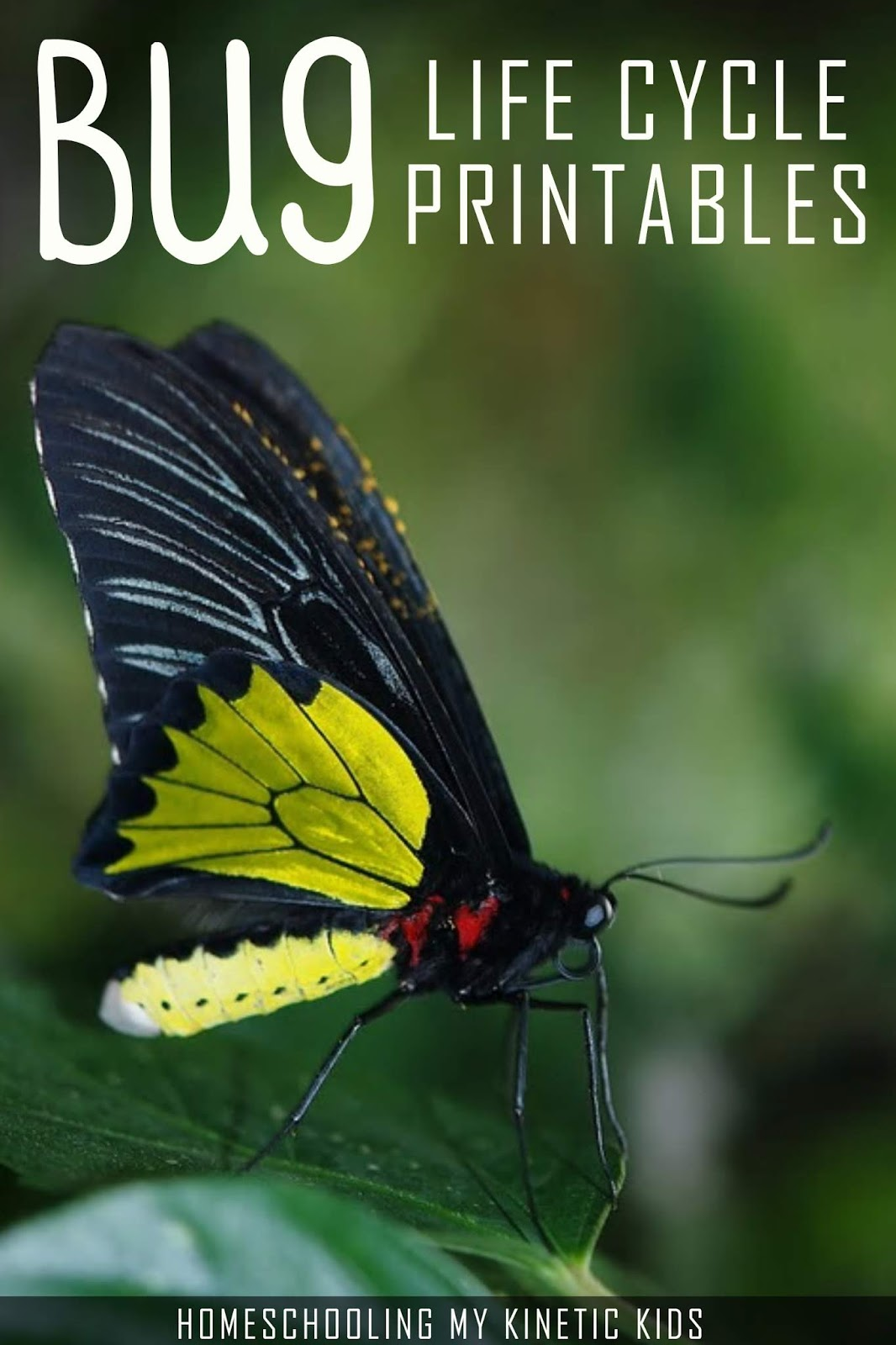 Insect Life Cycles And More