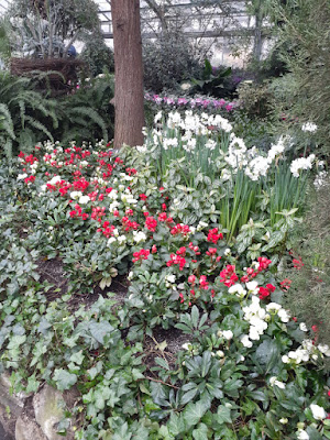 Allan Gardens Conservatory 2019 Winter Flower Show sixteen by garden muses--not another Toronto gardening blog
