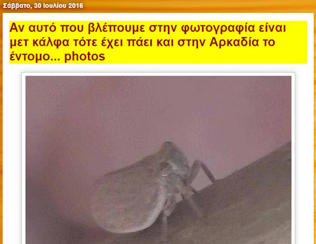 Από το 2016 ο Melissocosmos έγραφε ότι στην Πελοπόννησο εμφανίστηκαν έντομα που μοιάζουν με metcalfa!!! Κανένας αρμόδιος δεν ενδιαφέρθηκε...