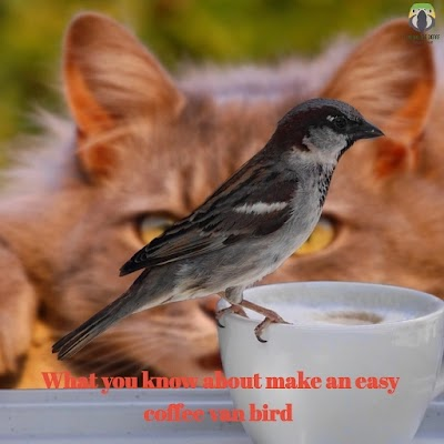 What You Know About Make An Easy Coffee Can Bird