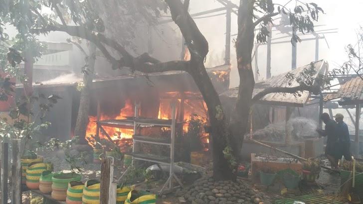 Si Jago Merah Mengamuk di Kampung Nelayang Untia