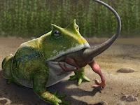 Gigitan Seperti Harimau, Katak Beelzebufo ampinga Mampu Memangsa Dinosaurus