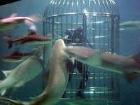 Sea World, Lihat Hewan-hewan Air Jadi Makin Asyik
