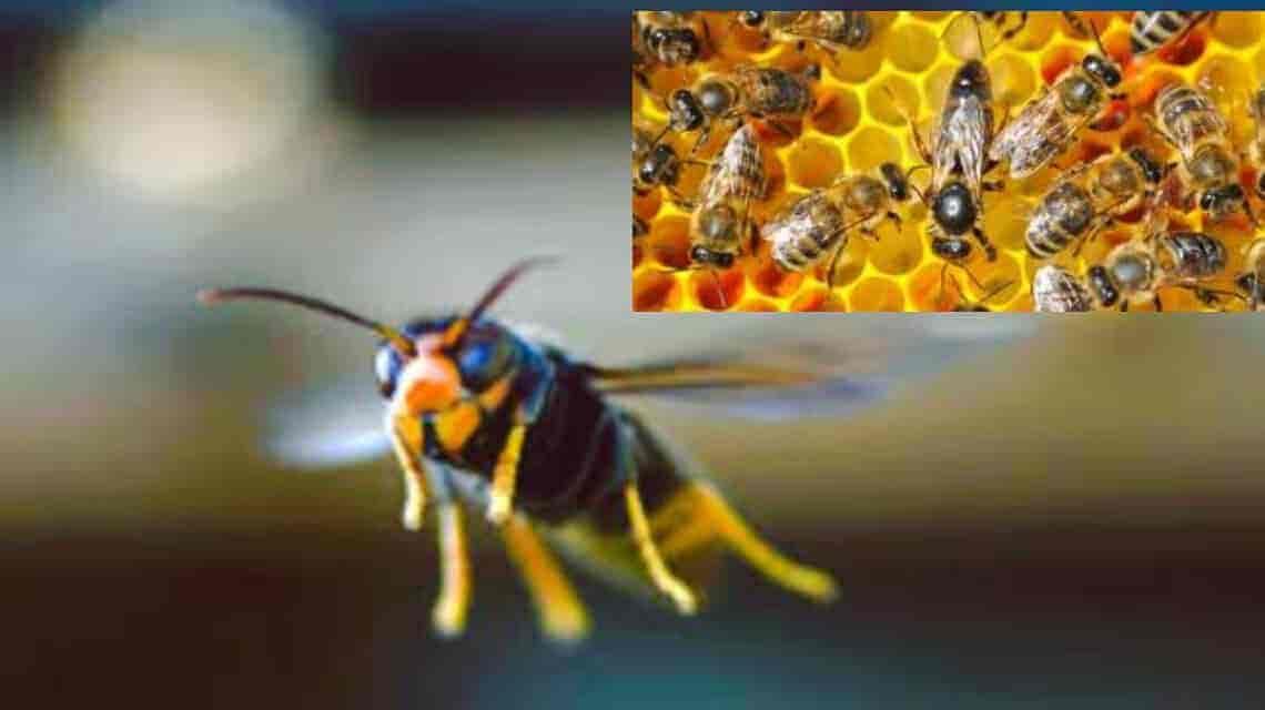 أسرار عالم النحل